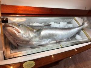 20-килограмови риби приготвят по италианска рецепта в центъра на Пловдив СНИМКИ+ВИДЕО
