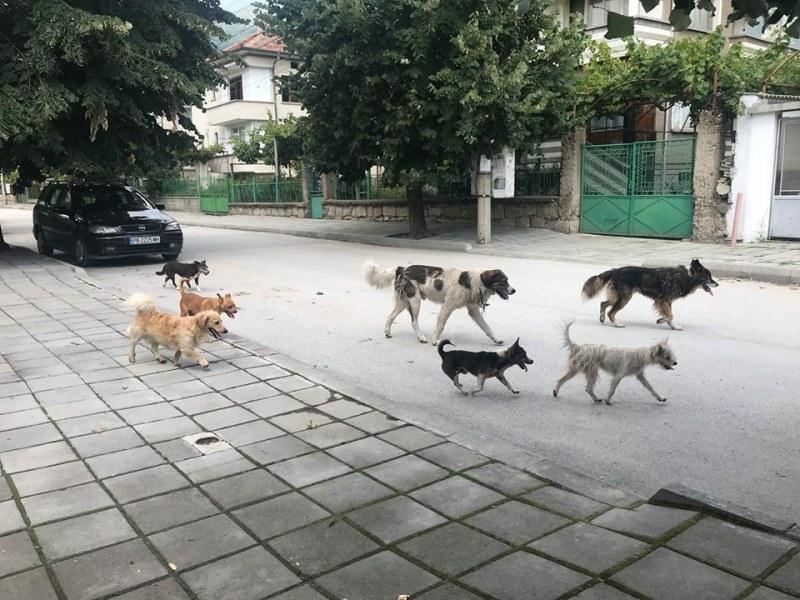На километри от Пловдив: Глутница бездомни и агресивни кучета наплаши граждани