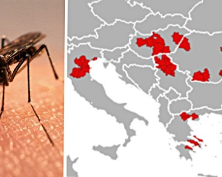Западнонилската треска вече взе 12 жертви на Балканите