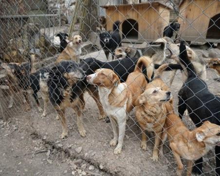 Проблемът с бездомните животни у нас стигна и до Брюксел