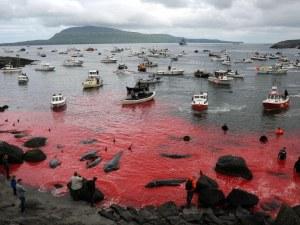 Кадри от брутално убийство на около 180 кита шокираха света ВИДЕО