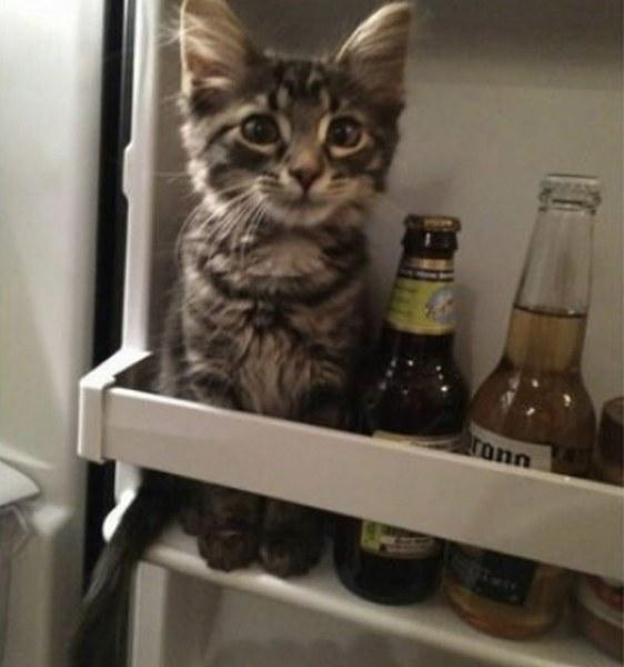 Забавни СНИМКИ разкриват какъв е животът с котка