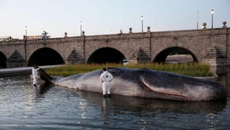 Живеещи в Мадрид се ококориха, след като видяха тялото на голям кит до мост