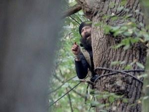 Десетки арестувани в Германия, крили се на дървета