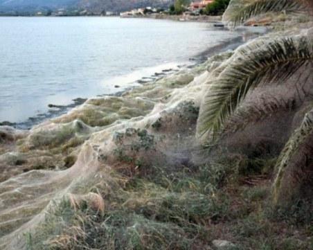 Гигантска паяжина захлупи цял плаж в Гърция и втрещи всички СНИМКА