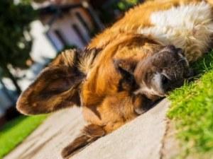 Психично болен уби по зверски начин куче в Благоевград