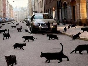 Разкриха мистерия с убийствата на над 400 котки