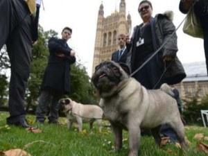Домашни кучета излизат на протест в Лондон