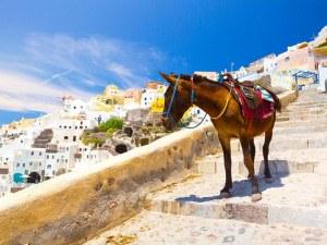 Ако сте над 100 кг, не ходете в Гърция, ще ви дискредитират