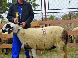 Показват маришки овце на изложба в Аграрния