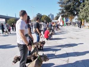 Парад на йоркширски териери! Елитни екземпляри дефилират в Пловдив