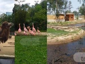 Община Пловдив започва да пълни зоопарка с животни, откриват го след решението на съда