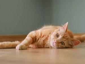 Десет признака, че вашата котка ви обича