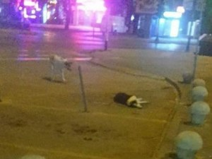 Зверство в Пазарджик! Неизвестен отрови 6 кучета, 4 от тях още се борят СНИМКИ 18+