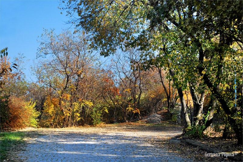 Великолепие от цветове и дъжд от падащи листа - есенният чар на Младежкия хълм СНИМКИ