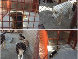 Държавата дава на Пловдив бивш парцел на МВР за разширяване на кучешкия приют