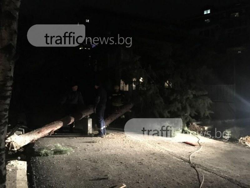 11-метров бор се стовари в центъра на Пловдив, по чудо няма жертви СНИМКИ