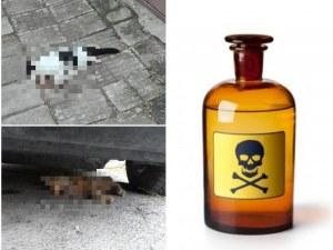 Пловдивчани, внимавайте за децата и кучетата! Разхвърлиха отрова в Съдийски, няколко котета издъхнаха