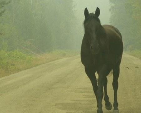 Внезапно излязъл кон предизвика катастрофа край Пловдив