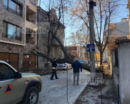 Дърво падна върху кооперация в центъра на Пловдив СНИМКИ