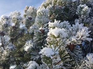 Януари идва по-студен от обичайното и с повече валежи