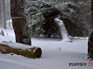 Зимата разстла бялата си пелерина на километри от Пловдив СНИМКИ