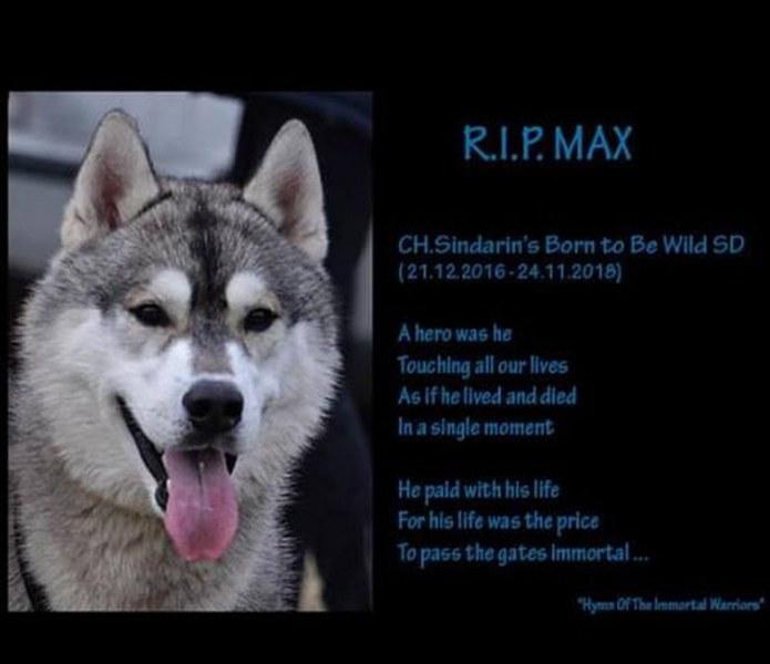 В памет на моето сибирско дете Макс - история за хората, за животните и за тая клета държава