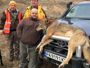Панагюрец отстреля 55-килограмов вълк, снимките взривиха социалните мрежи СНИМКИ