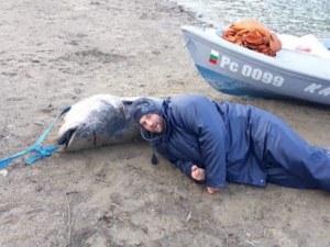 Гигантски сом уловиха рибари в река Дунав