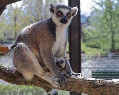 Софийският зоопарк чупи рекорд по бебета