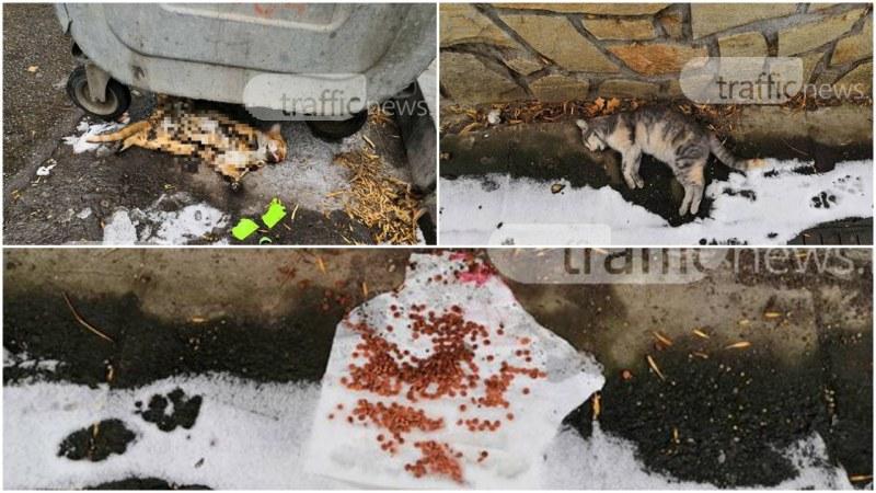 Изтреблението на котки с отрова в Пловдив продължава СНИМКИ