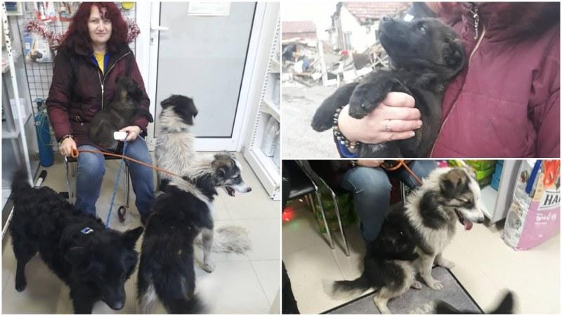 Спасиха 15 животинки от Войводиново! Те чакат помощта ни СНИМКИ