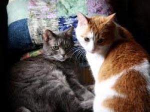 Американец нае апартамент за котките на дъщеря си