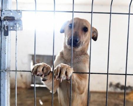 Бездомни кучета живеят в животински концлагер в Габрово
