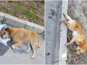 Потресаваща гледка в Прослав! Три кучета издъхнаха, след като бяха натровени СНИМКИ