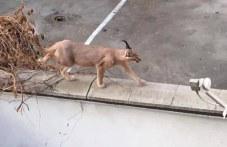 Рис избяга от дома си в Кършияка, след разходка се прибра сам вкъщи СНИМКИ