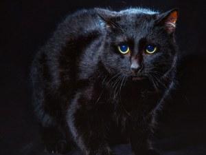 Бездомни котки станаха фотомодели СНИМКИ