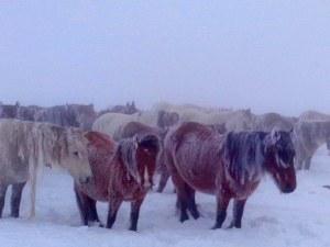 Коне в снежната виелица взривиха социалните мрежи СНИМКИ