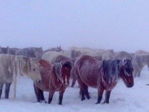 Не могат да намерят зарязаните коне над Пирдоп