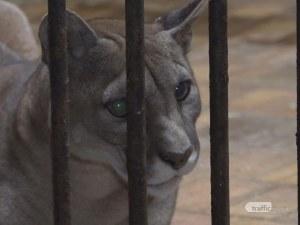 Явор Гечев за TrafficNews: През България минава незаконен канал за трафик на диви животни ВИДЕО