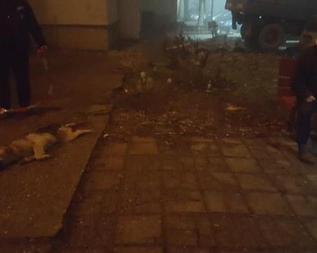 НЕчовешка жестокост! Безсърдечен мъж хвърли куче от осмия етаж СНИМКИ+ВИДЕО