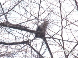 Домашна котка бедства четвърти ден на дърво