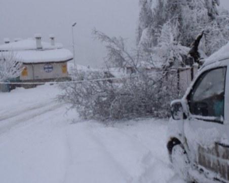 Пампорово е откъснато от света! Блокирани са туристи, снегът поваля дървета върху пътищата