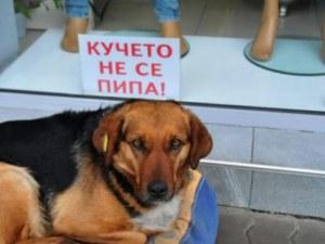 Бездомно куче се превърна в атракция за туристите във Велинград