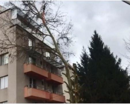 40-годишно дърво се стовари върху тераси на блок и ги потроши