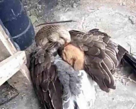 Любовта е безгранична! Поне между животните СНИМКИ