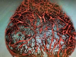 Беше създаден изкуствен кръвоносен съд