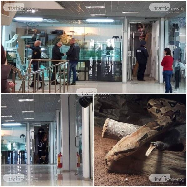 Боата, избягала от магазин в Пловдив, може да нападне човек ВИДЕО