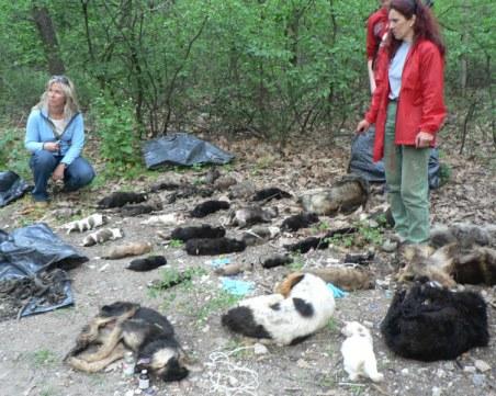 Деца в потрес: 11 кучета и котка отровени до забавачка !