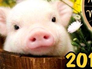 Девизът на всяка зодия в Годината на Жълтата земна Свиня